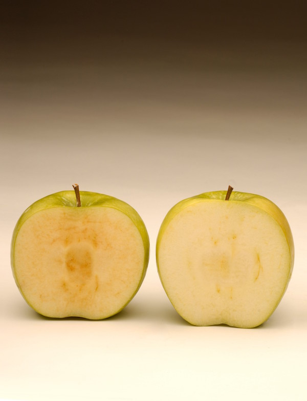 CSIRO scientists constructed an anti-PPO gene which, when inserted into plants, blocks the production of PPO and therefore stops the browning. ©Okanagan Speciality Fruits