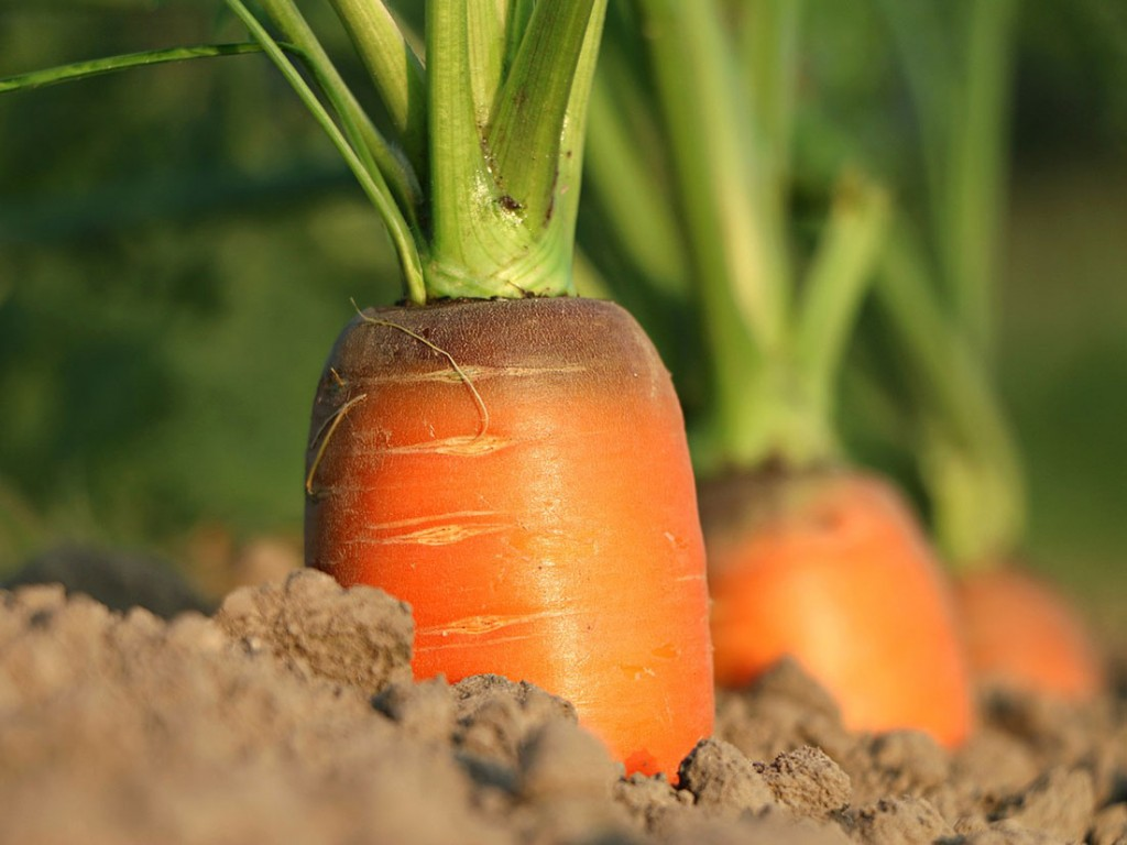 Demand for fresh Australian vegetables continues to rise