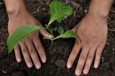 regenerative food system