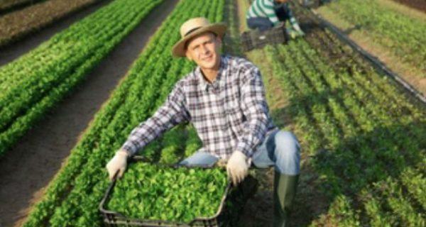 agribusinesses
