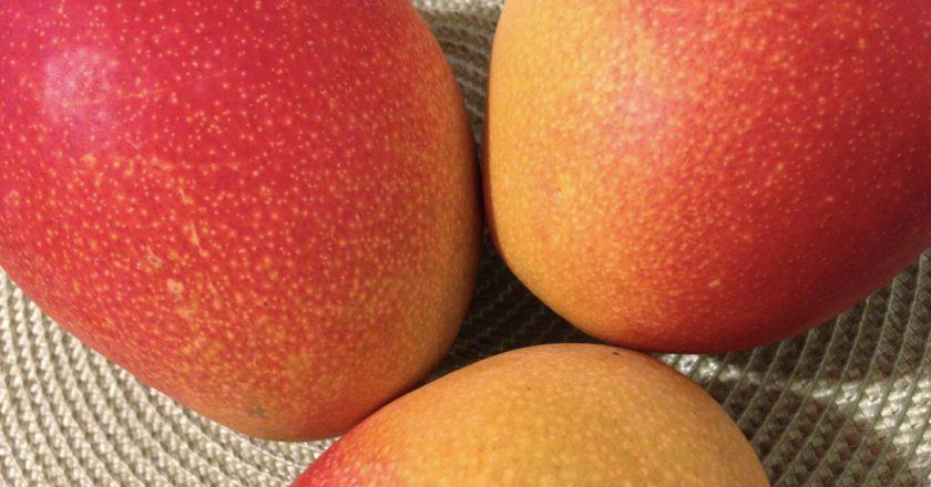 mango varieties