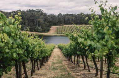 Sustainable Winegrowing Australia